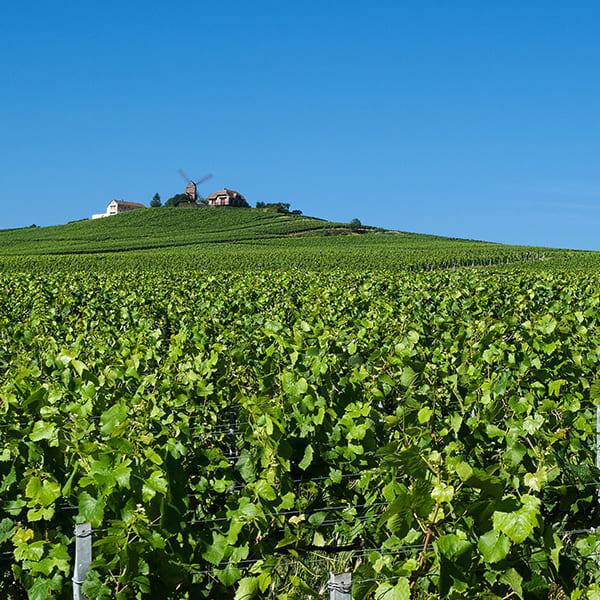 A la découverte des vignobles de Champagne pour votre séminaire