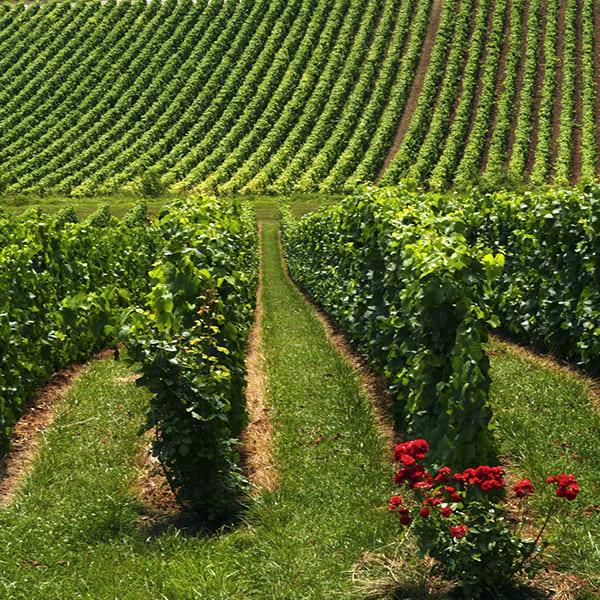 Séminaire au vert dans la région Champagne